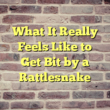 What It Really Feels Like to Get Bit by a Rattlesnake
